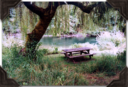 Picnic under the willow tree